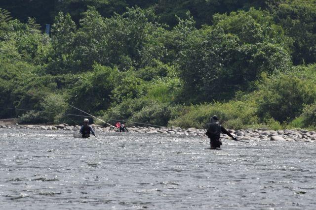 東京・多摩川で「鮎」の遡上が激減…前年の3分の1程度まで減る