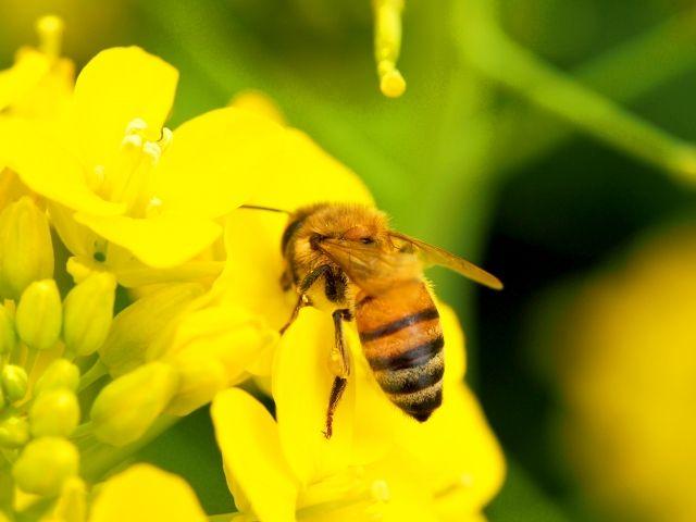 【生態系】ドイツの自然保護区にいる飛行昆虫達が「30年間で75%」も減少