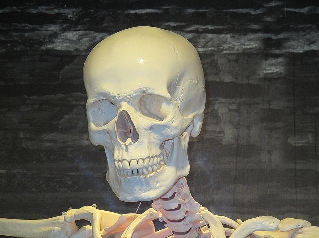 【歴史】人類の起源は定説の「20万年前」ではなく「30万年前」だった…現代人と顔つきも対して変わらず、定説覆す化石を発見か