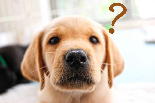 「犬」は、なぜ飼い主を守るのか…人と同じように「共感能力や絆」が存在する?