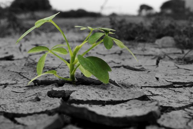 【ヨーロッパ】歴史的な干ばつにより幅広い分野で被害が深刻化