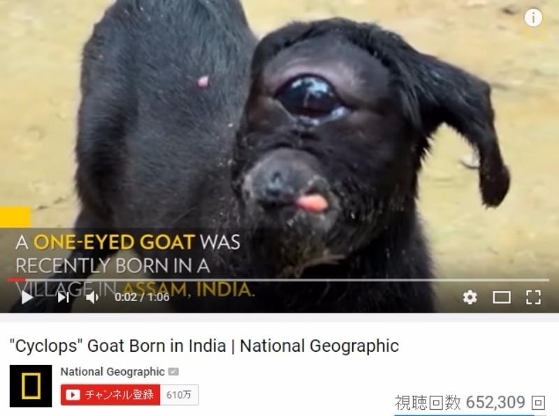 【動画あり】インドで「一つ目のヤギ」が生まれ、村人らが驚愕!
