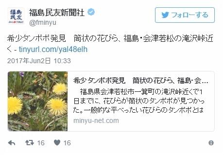 【なぜ】福島県の会津若松で珍しい「タンポポ」を発見…一般的なのとは形状が異る