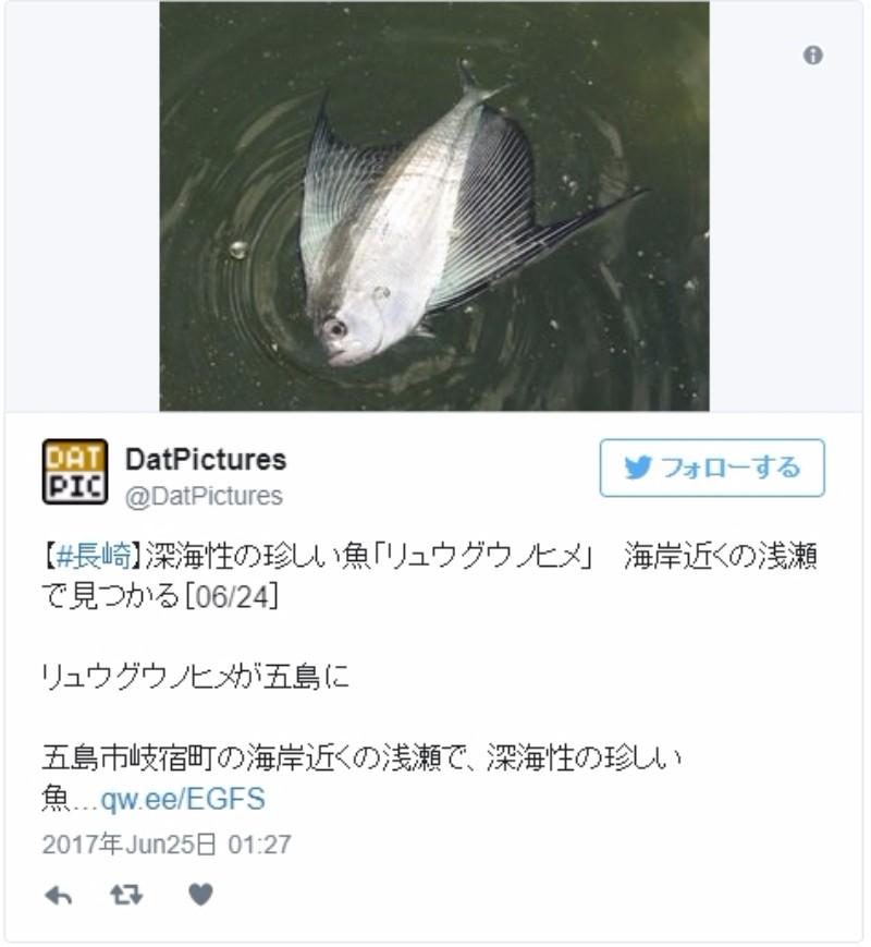 【九州】長崎の海岸に深海魚「リュウグウノヒメ」が打ち上がる!国内で目撃されるのは「非常に稀」