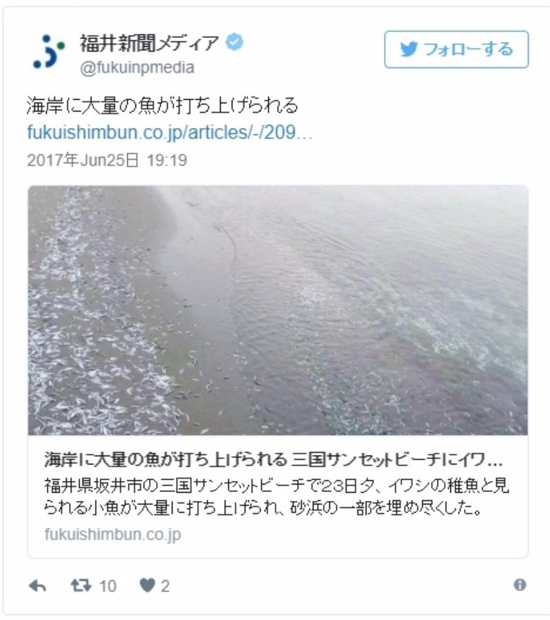 【イワシ】福井県の海岸に「大量の小魚」が打ち上げられる!「年に数回程度あるが、全くない年もありで詳細はわからず」