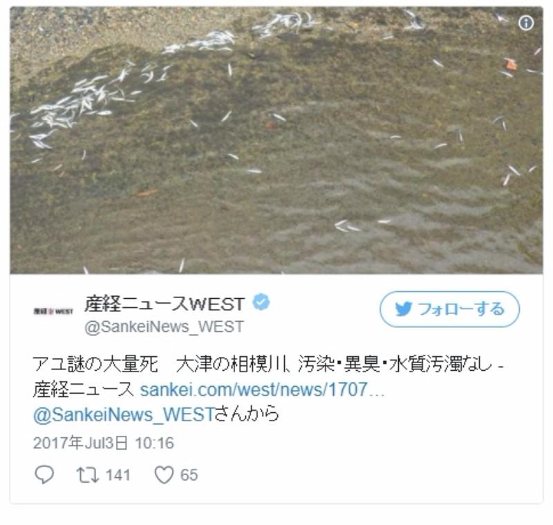 【原因不明】滋賀県の相模川で「鮎(アユ)」が謎の大量死