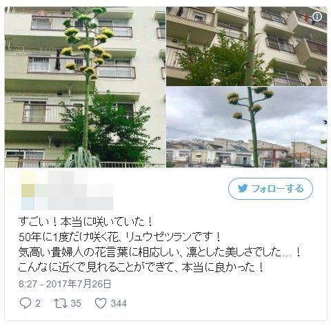 50年に一度と言われている「リュウゼツラン」の花が各地で咲く…香川県ではバナナの実がなり、専門家「非常に珍しいこと」