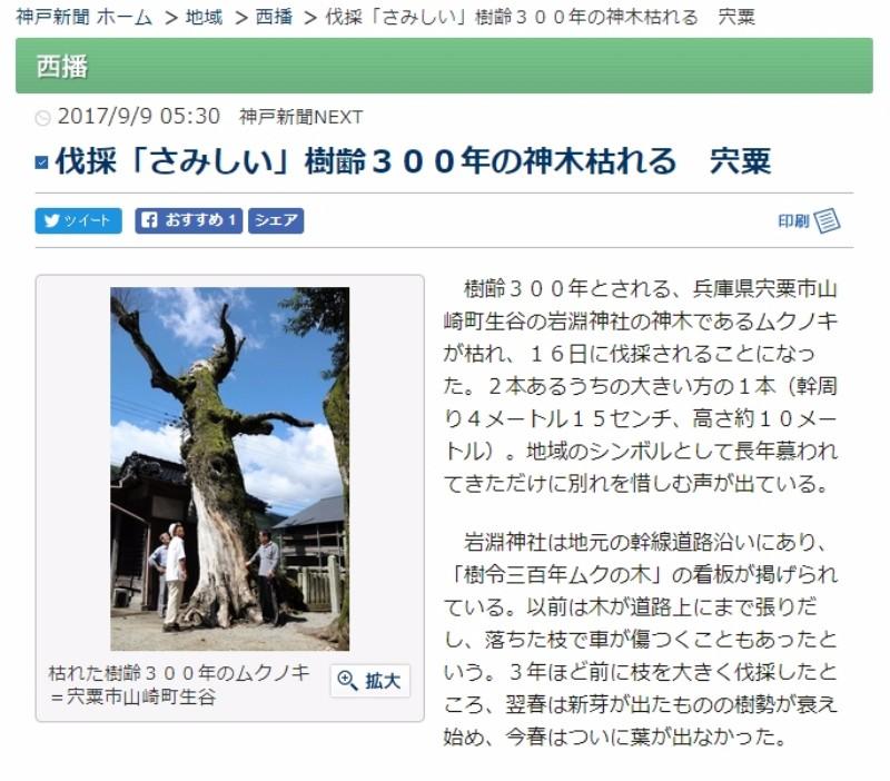 【ムクノキ】兵庫県にある岩淵神社の樹齢300年の「御神木」が枯れ、伐採される模様