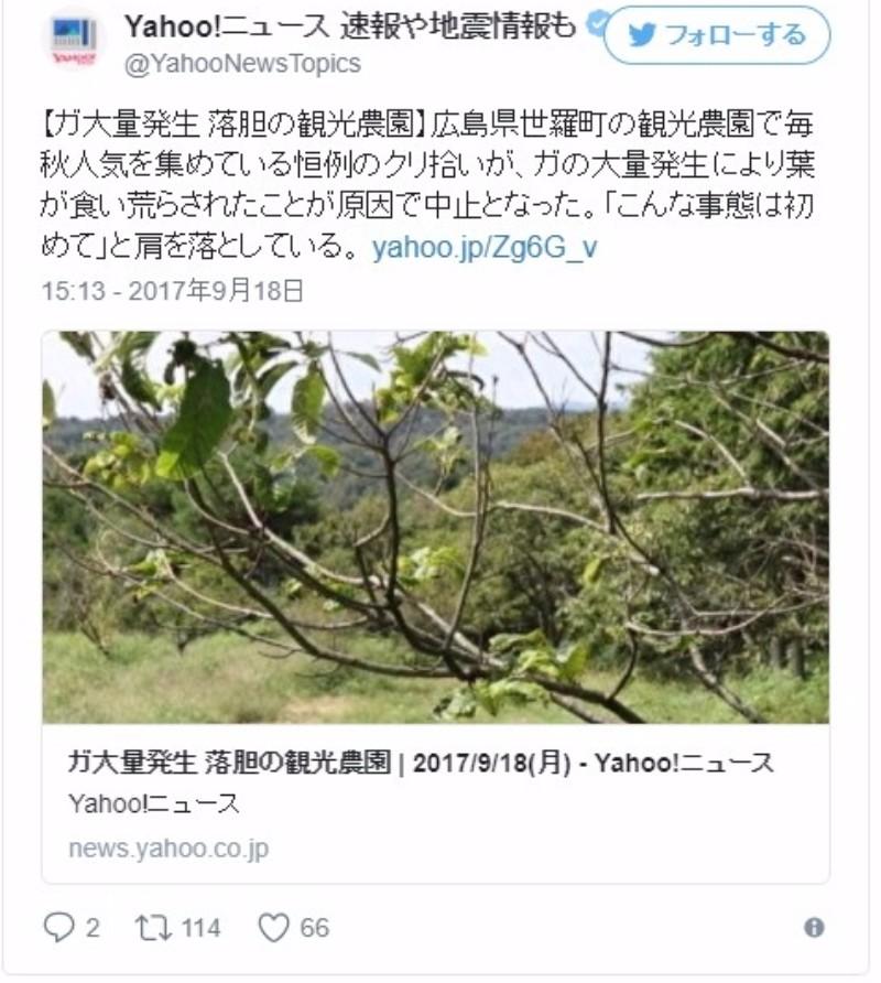 広島で「蛾」が大量発生し、クリの木が食い荒らされる…「こんな事態は初めて」