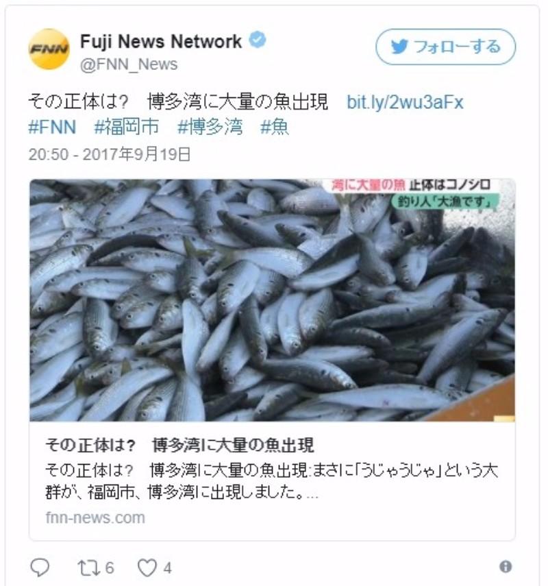 【前触れ】博多湾河口付近に大量の魚「コノシロ」が出現!「こんなの見たのは初めて」