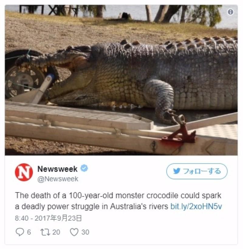 【オーストラリア】年齢は100歳近く、体長5.2メートルもある巨大な「ワニ」が見つかる!