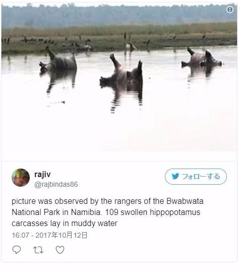 【ナミビア】わずか1週間で「100頭」以上のカバが大量死…原因は炭疽菌のせい?