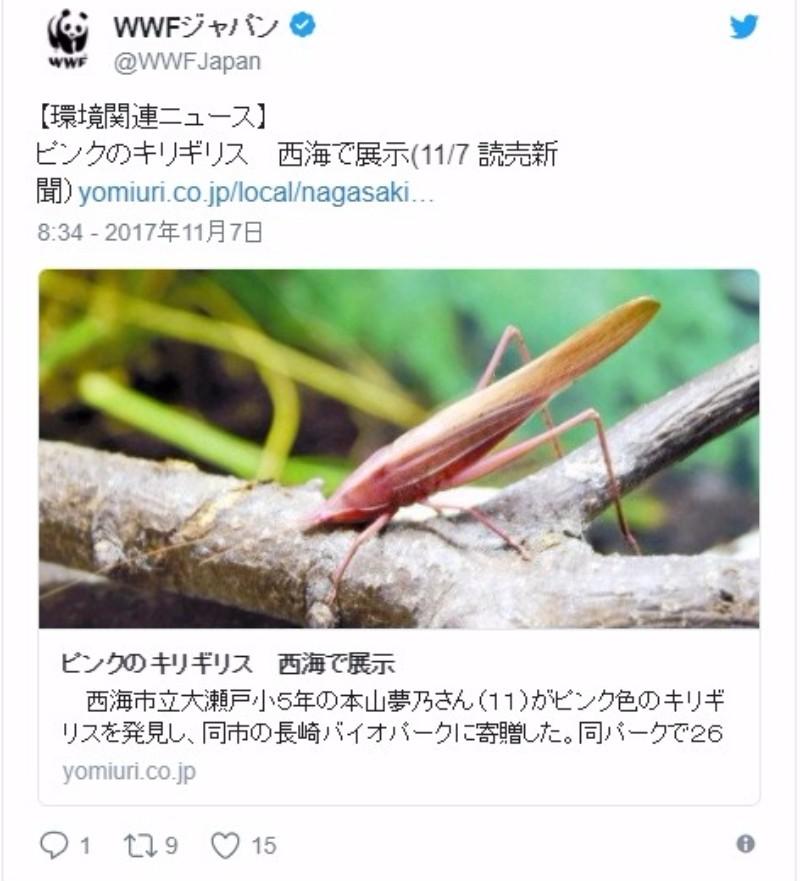 【長崎】ピンク色をしたキリギリスを発見…突然変異か?長崎バイオパークで展示中