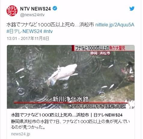 【静岡】浜松の水路でフナなど「1000匹」以上が大量に死んでいるのが見つかる