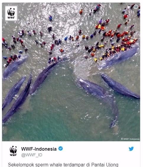【インドネシア】マッコウクジラ「9頭」が打ち上がる!当局などが救出活動へ