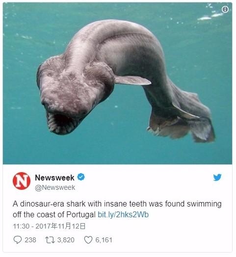 【深海魚】ポルトガルで生きた化石と呼ばれる「ラブカ」が捕まる!