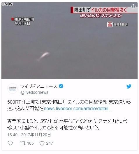 【珍しい】東京・隅田川に小型のイルカ(スナメリ)が目撃される!今月3日には黒っぽいイルカも出現していた模様
