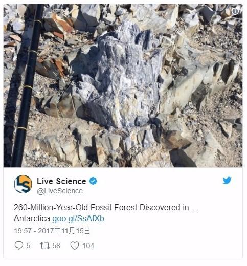 南極はかつて森だった!古代の「木の化石」を発見…内部からは微生物や菌類の化石までも見つかる