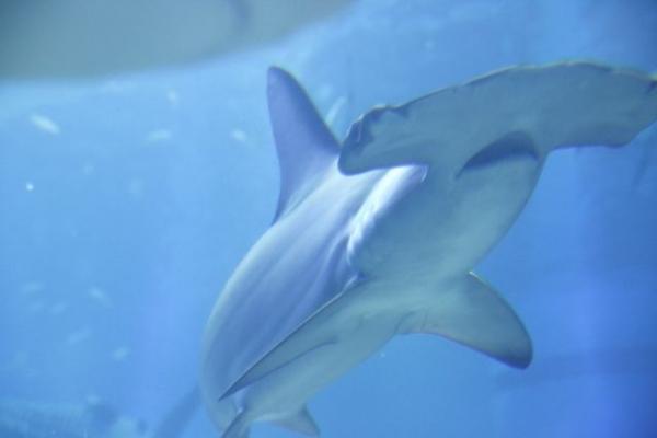 shark635876.jpg