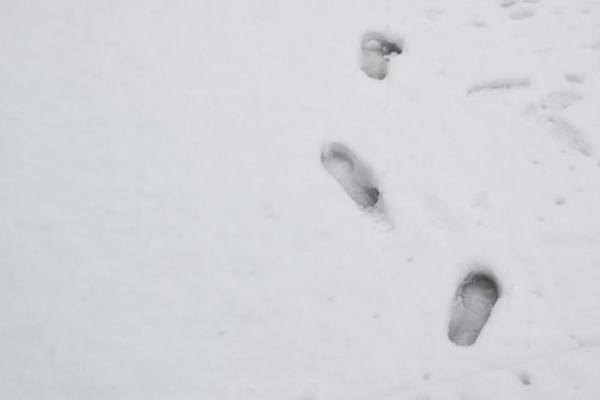 snow856786.jpg