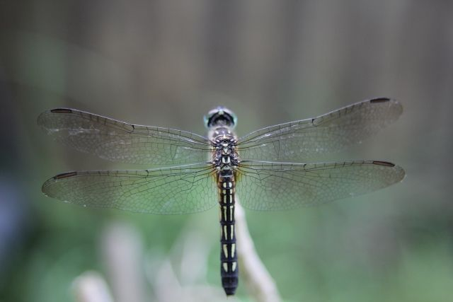 【不思議】冷静に考えたら「昆虫」って地球外生命体としか考えられない…トンボとかドローンじゃないのか?