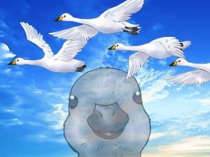 白鳥が空を飛ぶ