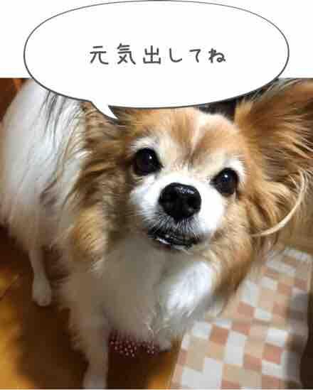 fc2blog_20171017202346f33.jpg