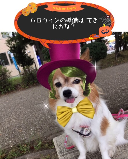 fc2blog_20171017202419fd7.jpg