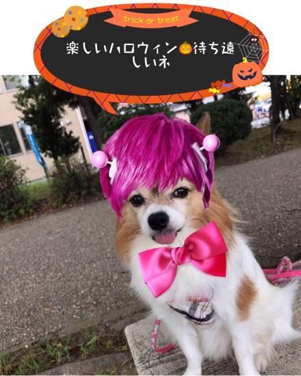 fc2blog_201710172025076bf.jpg