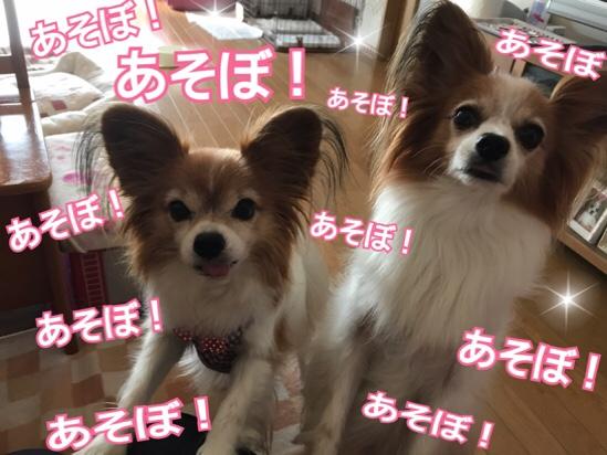 fc2blog_20171027183151d3b.jpg