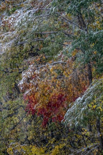 紅葉と雪-1