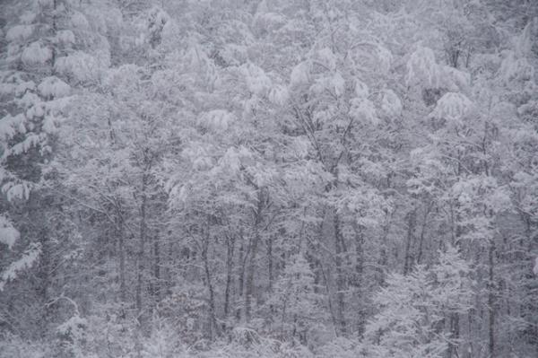 わさわさ雪-1