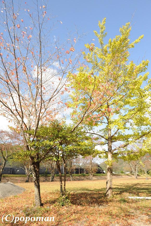 DSC_0021 - コピー2017 11 7 大井川鉄道 家山~抜里 580 871 popoman