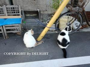 飲み屋の猫達