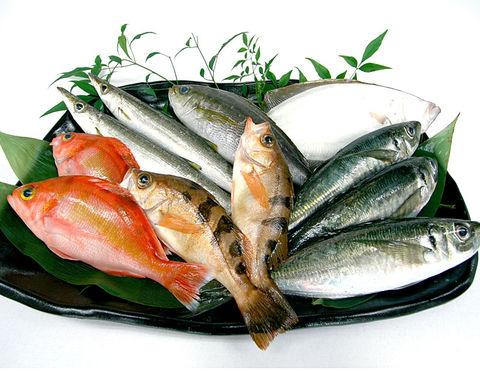 saknafish.jpg