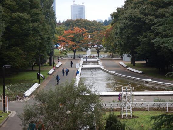 代々木公園②