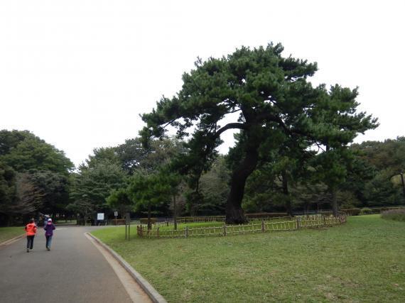 代々木公園⑦