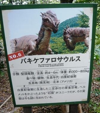 ディノアドベンチャー:6パキケファロサウルス1