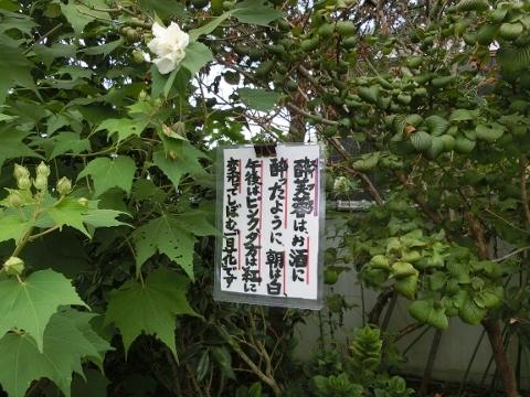 2017-09-23 彼岸花 040 (480x360)