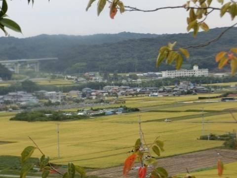 2017-10-06 散歩 001 (480x360)