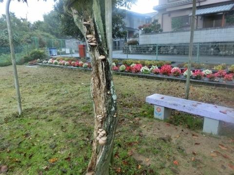 2017-11-08 散歩 004 (480x360)