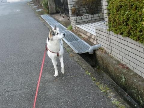 2017-11-15 散歩 002 (480x360)