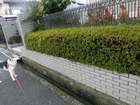 2017-11-15 散歩 003 (480x360)