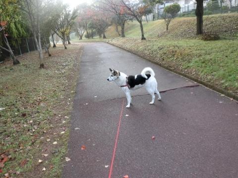 2017-11-15 散歩 012 (480x360)