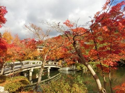 2017-11-21 紅葉 081 (480x360)