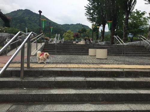 クウちゃんとお花見(富士川クラフトパーク・バラ)