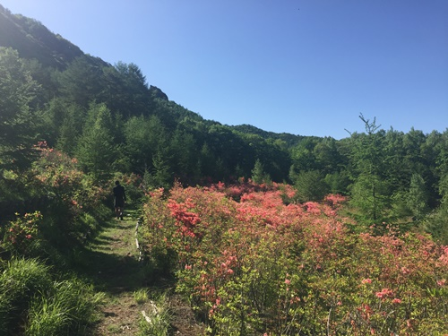 みずがき山自然公園2