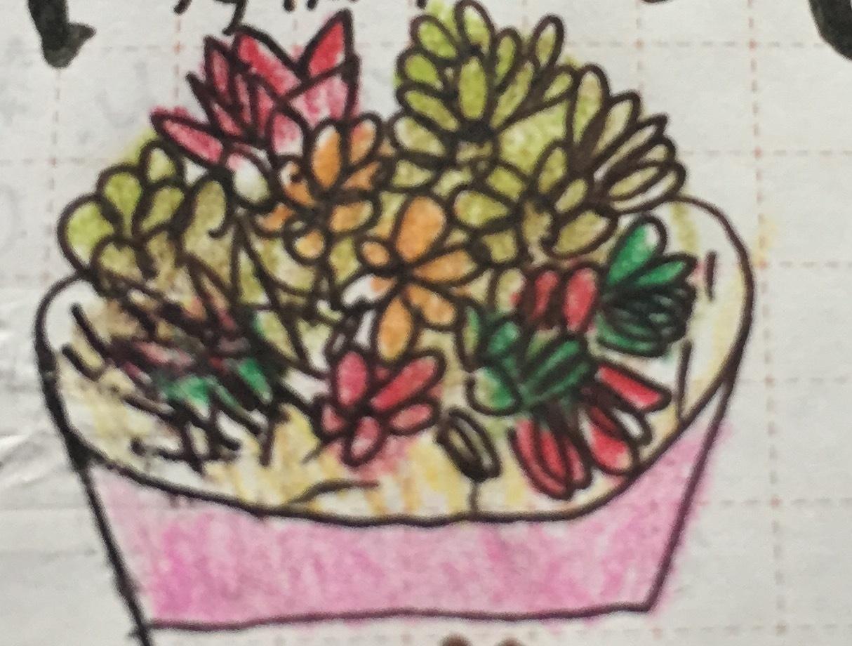 多肉植物成長記録①(葉挿しと挿し木)