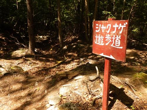 廻り目平キャンプ場一日目13