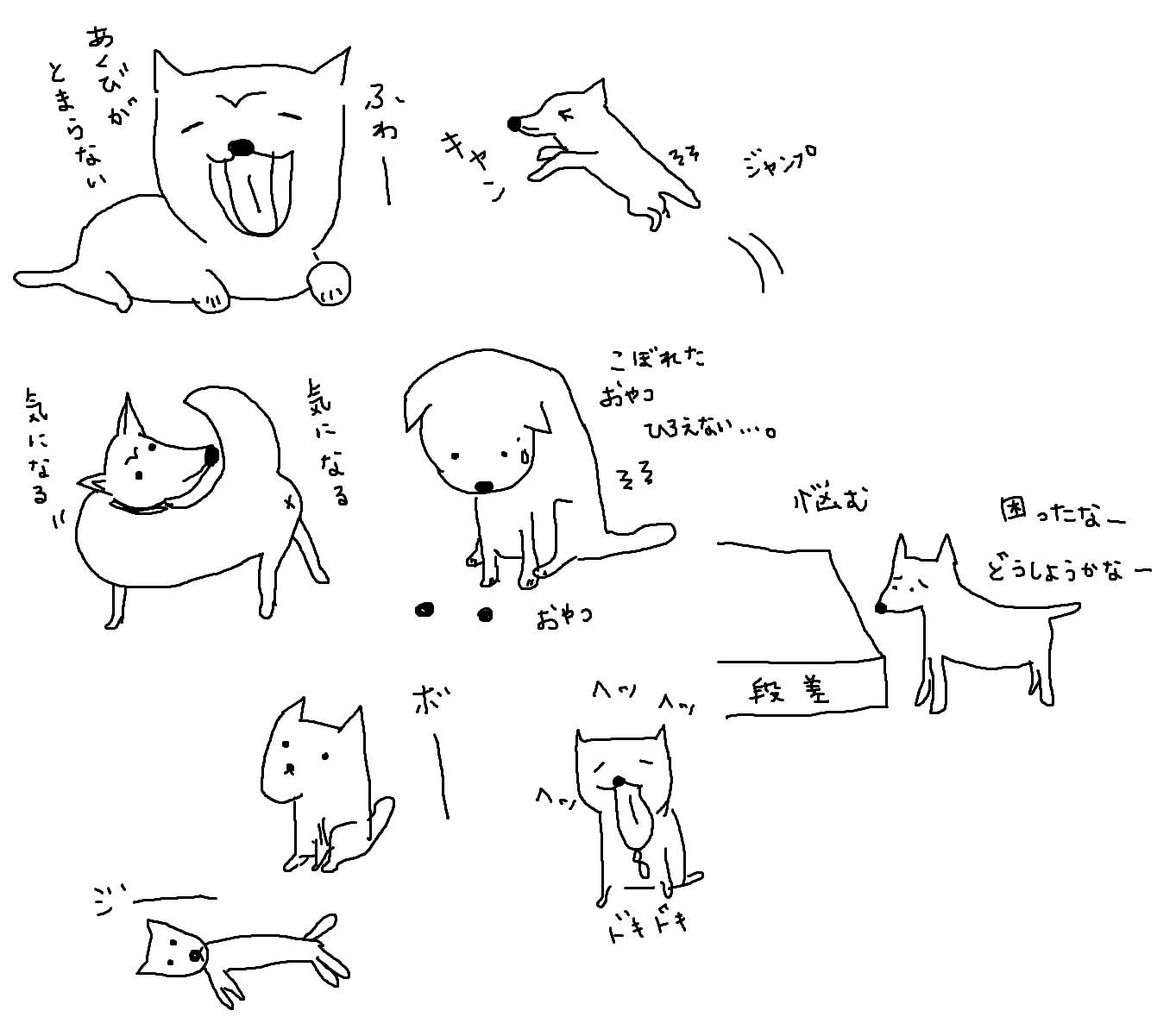 柴犬さくら6歳、腰痛(軽度のヘルニア)と診断される